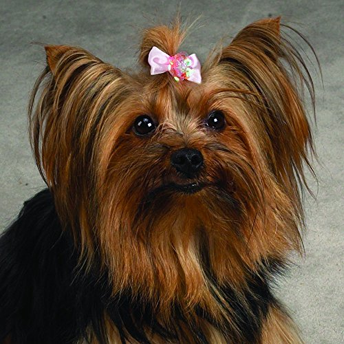 Aria Pixie Bows for Dogs, 100-Piece Canisters by Aria (Image #3)