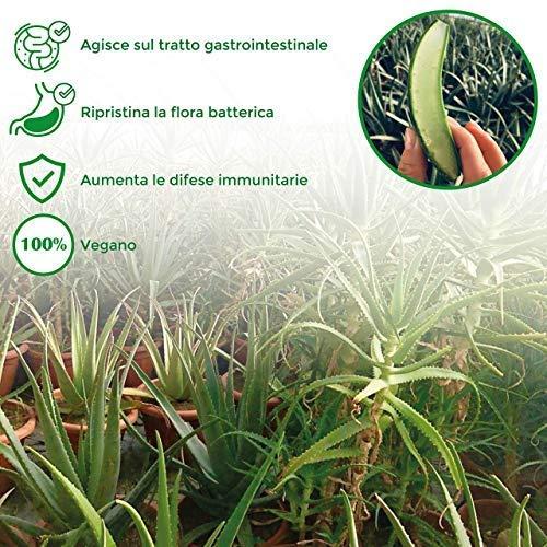 Succo di Aloe Vera e Melograno - 3L 2