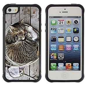 ZETECH CASES / Apple Iphone 5 / 5S / KITTEN HOUSE CAT AMERICAN BOBTAIL / gatito casa gato americano bobtail / Robusto Caso Carcaso Billetera Shell Armor Funda Case Cover Slim Armor