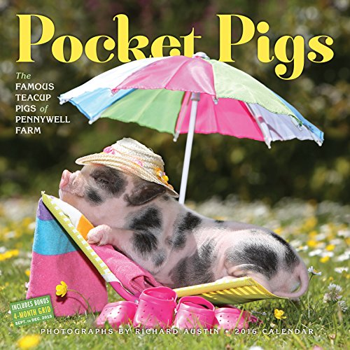 Pocket Pigs Wall Calendar 2016: The Famous Teacup Pigs of Pennywell