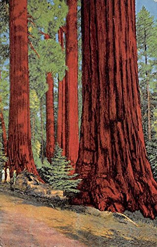 North Grove Kings Canyon, National Park, California, USA Logging, Timber Postcard
