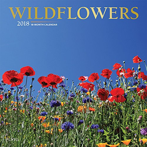 Download or read books ebooks and magazines free books download wildflowers 2018 12 x 12 inch monthly square wall calendar with foil stamped cover by plato flower floral plant outdoor naturepdf fandeluxe Gallery