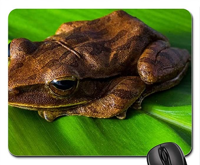 Amazon.com: TREE FROG Mouse Pad, Mousepad (Frogs Mouse Pad): Cell ...