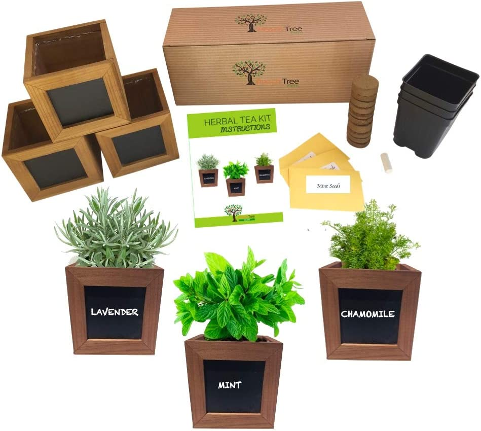 Indoor Herb Growing Kit - Tea Garden Kit - Lavender, Chamomile & Mint Seeds for Planting Indoors Kit - Medicinal Herb Seed Kit