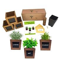 Indoor Herb Growing Kit - Tea Garden Kit - Lavender, Chamomile & Mint Seeds for Planting Indoors Kit - Medicinal Herb Seed Kit