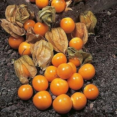 100 Seeds of Cape Gooseberry Ground Cherry Seeds
