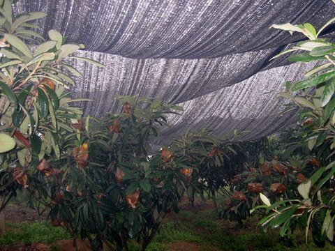 Agfabric Sunblock Shade Cloth 40 Uv 12x16ft Black Cut Edge With Free Clips For Plant Cover