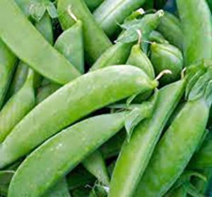 Pea Seed, Sugar Snap Pea, Heirloom, Non GMO, 100 Seeds, Perfect Peas