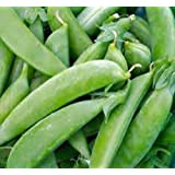 Pea Seed, Sugar Snap Pea, Heirloom, Organic, Non Gmo, 20+ Seeds, Perfect Peas