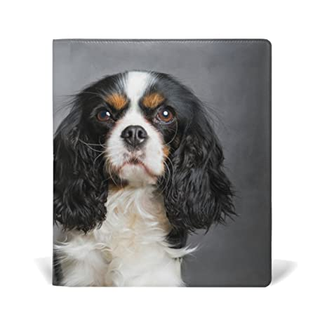 where to buy a cavalier king charles spaniel