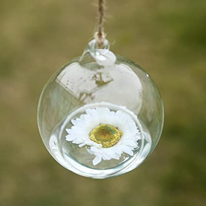 Amazon Com Soledi Terrarium Plants Hanging Glass Globe Plant Hanger