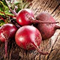 Bulls Blood Beet Seeds - Non-GMO, Heirloom - Vegetable Garden, Microgreens Seeds