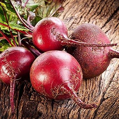 Bulls Blood Beet Seeds - Non-GMO, Heirloom - Vegetable Garden, Microgreens Seeds