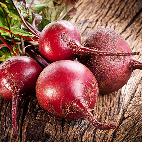 Bulls Blood Beet Seeds - 25 Lb Bulk - Non-GMO, Heirloom - Vegetable Garden, Microgreens Seeds by Mountain Valley Seed Company