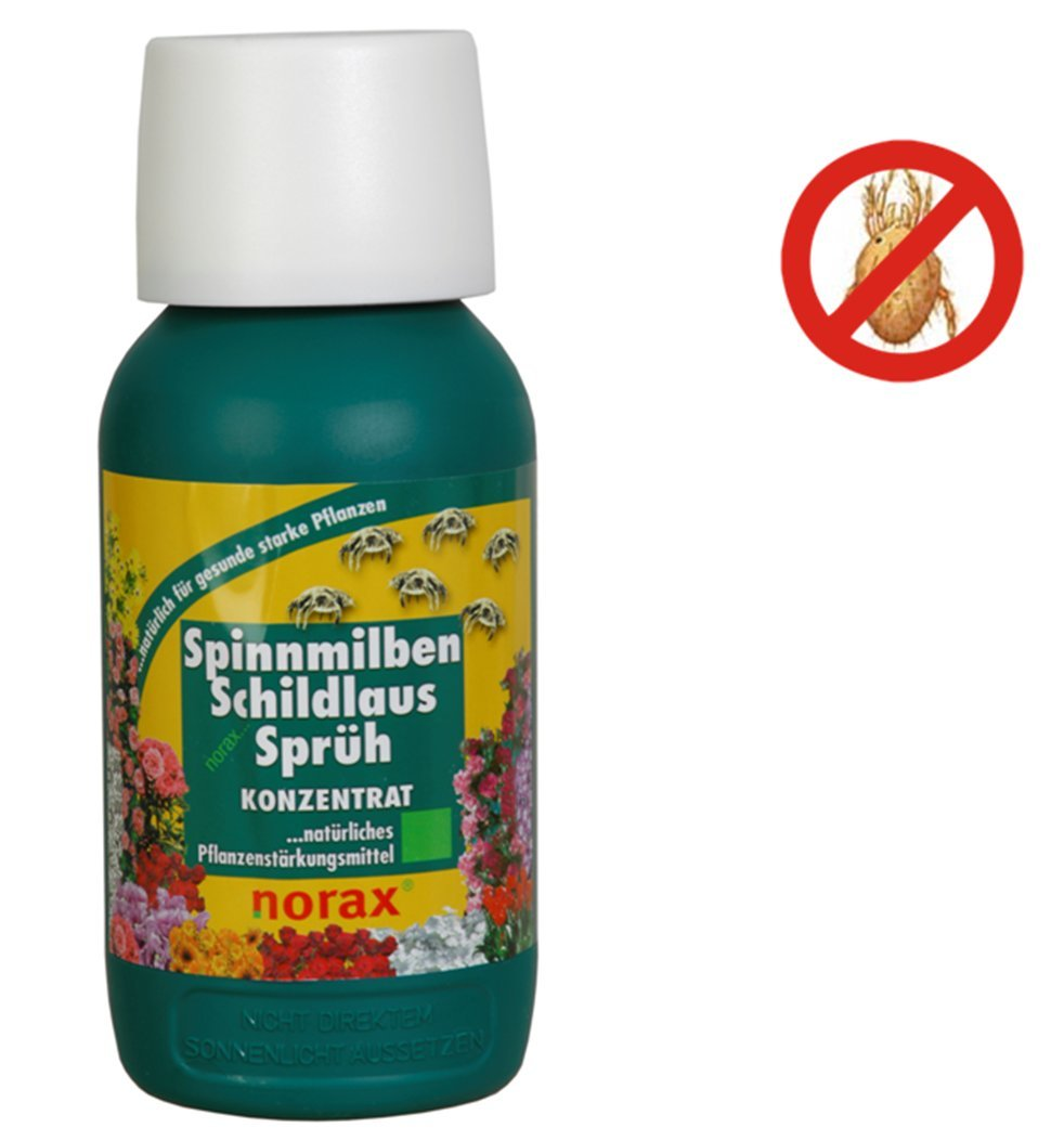 norax Spinnmilben Schildlaus Schutz Sprüh Konzentrat 500 ml