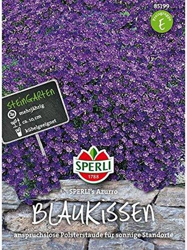 Blaukissen (Aubrietia) SPERLING`s Azzurro
