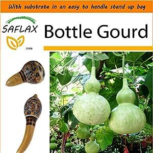 SAFLAX - Garden in the Bag - Bottle Gourd - 15 seeds - Lagenaria siceraria