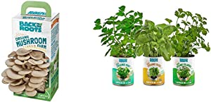Back to the Roots Organic Mushroom Growing Kit + Garden-in-a-Can Kitchen Herb Variety 3 pack Basil/Cilantro/Mint