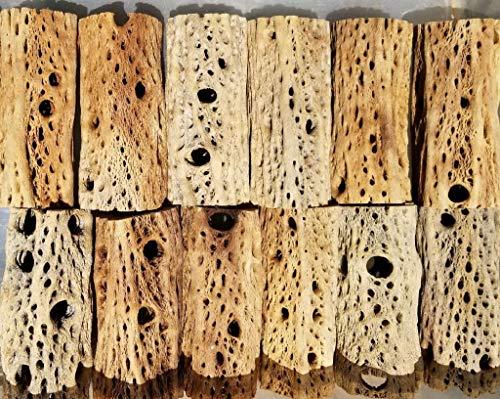 3, 6, 9, 12 Inch All Natural Teddy Bear Cholla Wood Extra Hollow Untreated Organic Aquarium Driftwood Decoration Chew Toy Shrimp Crab Pleco Cichlid Nano Tank Birds 1 or 5 Pieces (1 Piece, 6 inch) (Hollow Bear)