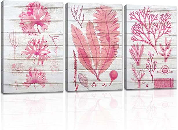 Dekhome 3 Pieces Pink Coral Evolution Painting Prints Seaweed With Wood Background Picture Vintage Coastal Canvas Wall Art Stretched Framed Posters For Bedroom Nautical Room Bathroom Spa Home Office Decor 16x24inchx3pcs