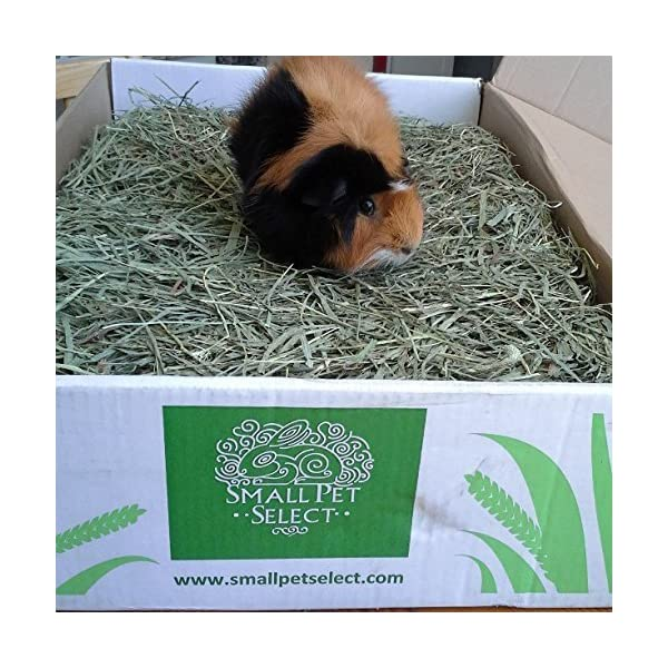 """Small Pet Select 2nd Cutting """"Perfect Blend"""" Timothy Hay Pet Food 8"""