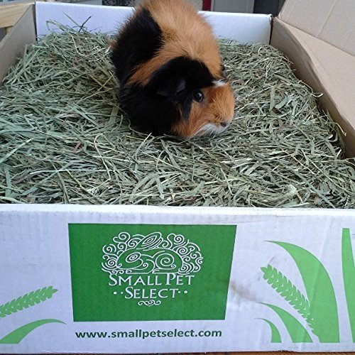 Small Pet Select 2nd Cutting Timothy Hay Pet Food, 8-Pound by Small Pet Select (Image #5)