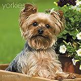 Yorkies Wall Calendar (2017)