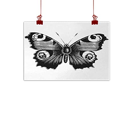 c2779d1b2 Sunset glow Wall Painting Prints Black and White,Vanessa Peacock Butterfly  Vintage Style Wildlife Theme