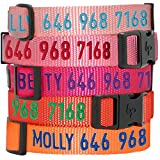 Blueberry Pet Essentials 30 Colors Personalized Dog Collar, French Pink, Small, Adjustable Customized ID Collars for Small Dogs Embroidered with Pet Name & Phone Number