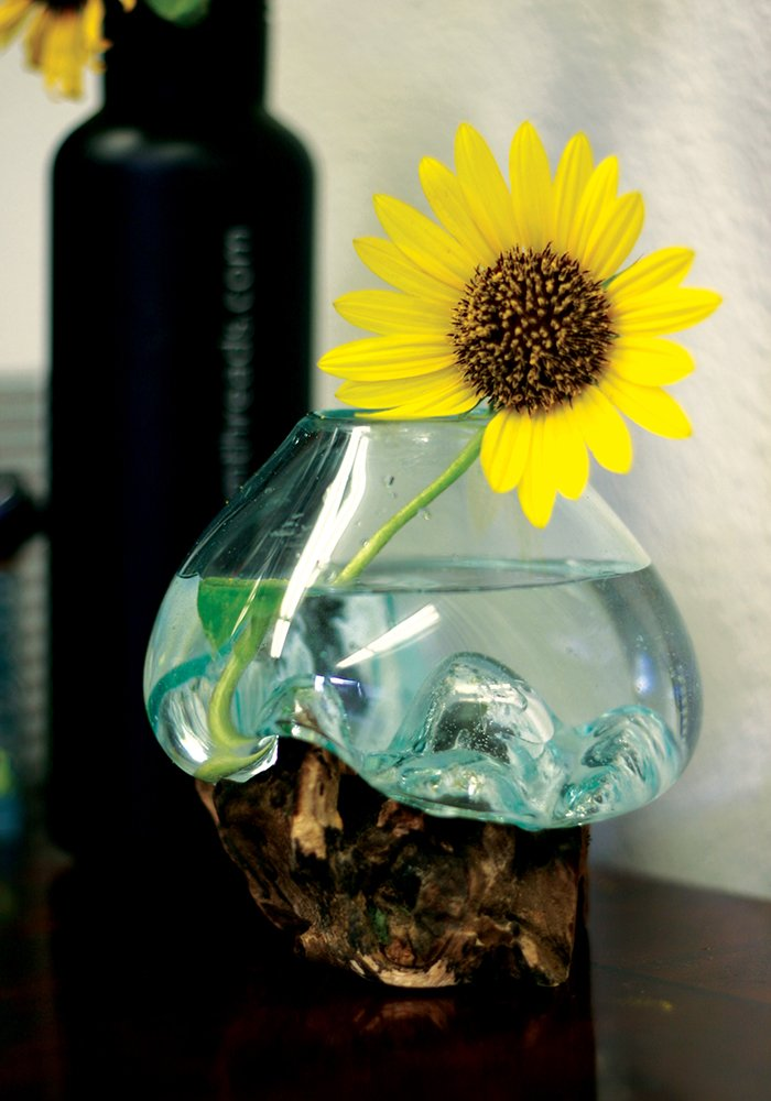 Mini Hand Blown Molten Glass and Wood Root Sculptured Terrarium / Vase / Fish Bowl (6x6'') by In the Garden and More