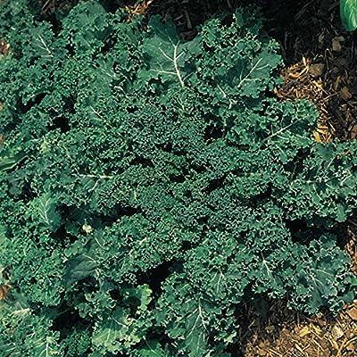 Park Seed Winterbor Hybrid Kale Seeds