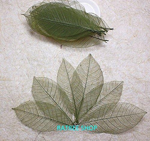 Thai Handmade 100 Pcs Olive Green Skeleton Leaves Rubber Tree Natural Scrapbook Craft CARD Wedding By RATREE (Thai Handmade Paper)