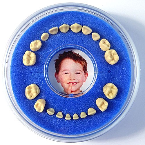 Firsty Round First Tooth Box (Blue, Boy)