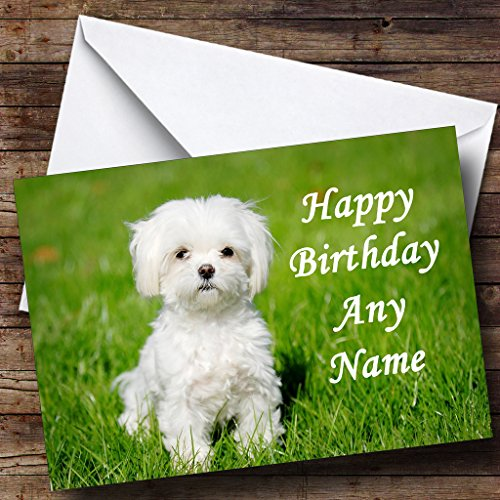 Maltese Terrier Dog Personalized Birthday Greetings Card
