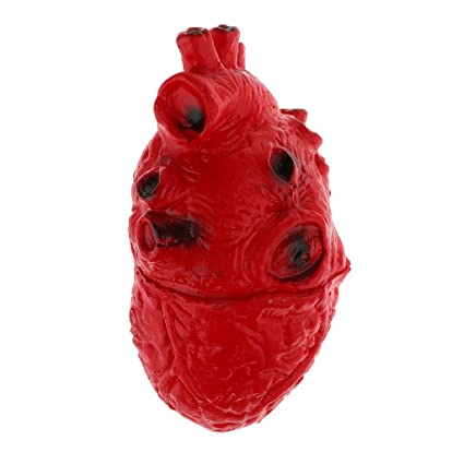 Juguete Prop de Miedo Parte Cuerpo de órganos Corazón de Humano Embrujada Casa Decoración Halloween Horror