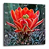 3dRose Decorative Colorful Garden Botanic Classic Plant SW Southwest Desert Cactus Red Flower - Wall Clock, 13 by 13-inch (DPP_32341_2)