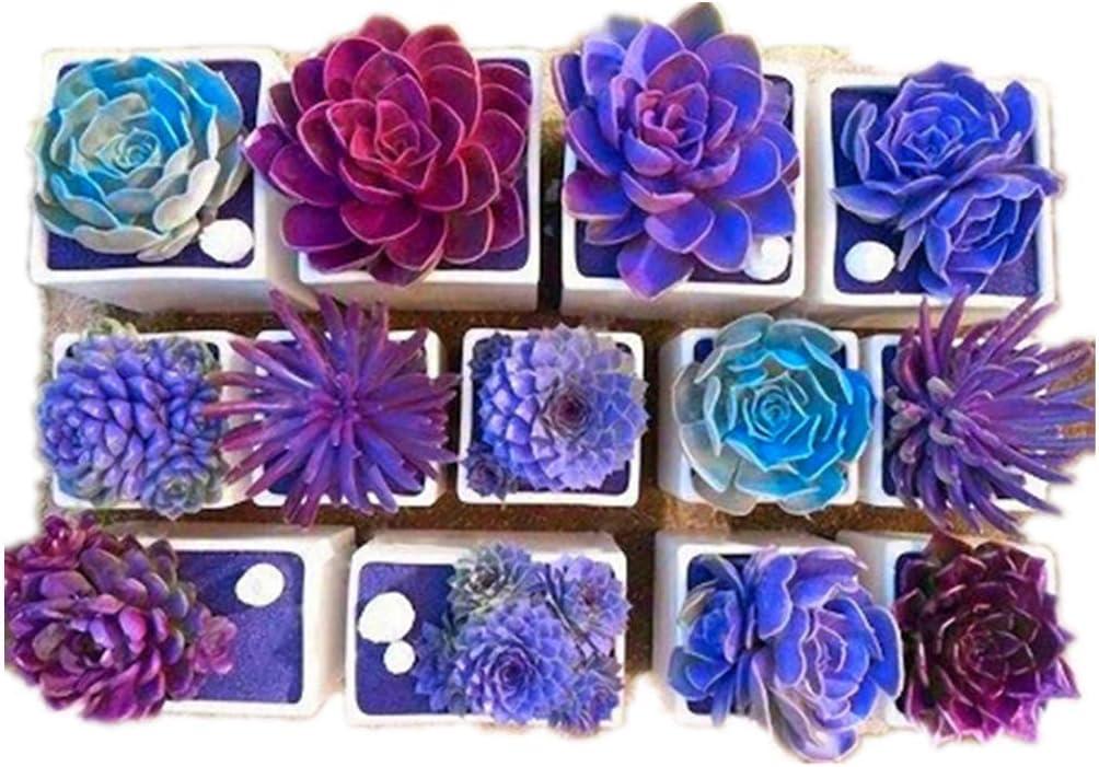paquete multi plantas suculentas semillas plantas ornamentales semillas patio jard/ín con semillas de flores Rosepoem 100 unid