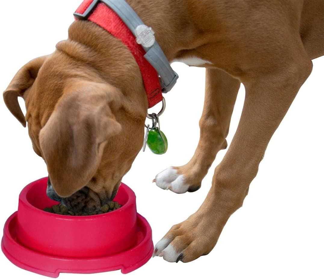 PetLike Dog Bowls Pet Food Bowls, No Spill Cat Food Bowl Water Food Feeder Pet Dishes for Cat Puppies Small Dogs