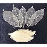 100 Brown Skeleton Leaves Rubber Tree Natural Scrapbooking Craft DIY Card Wedding.