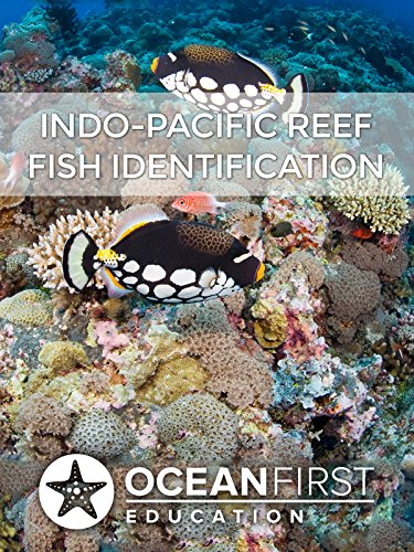 Indo-Pacific Reef Fish Identification ()