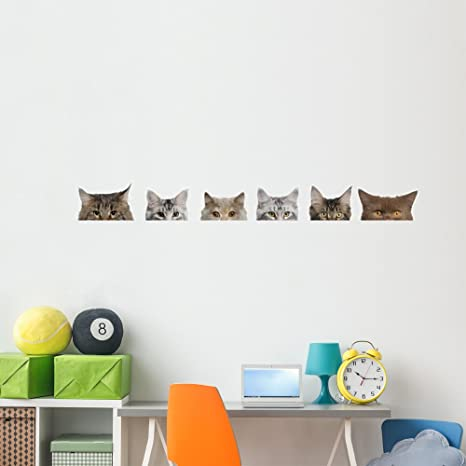 Amazon.com: Maine Coon gatos pared calcomanía Set ...