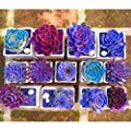 200Pcs Mixed Flower Seeds Rare Beauty Succulent Easy to Grow Mini Potted Garden