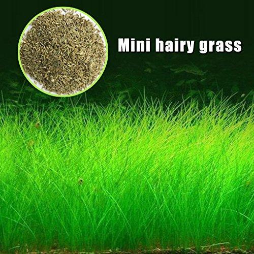Richi Plant Seeds Fish Tank Aquarium Aquatic Water Grass Decor Garden Foreground Plant Pet Feed (Mini hariy grass)