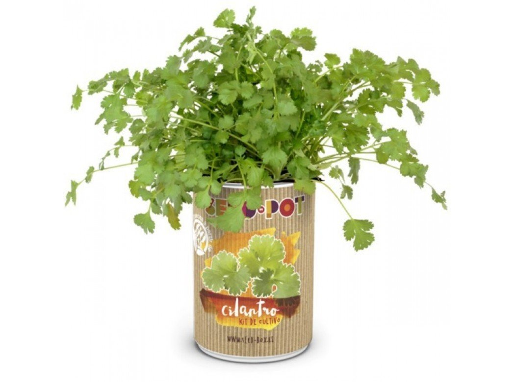 SeedBox SBLCI-Lata de Cultivo Cilantro, Multicolor, No Aplica ...