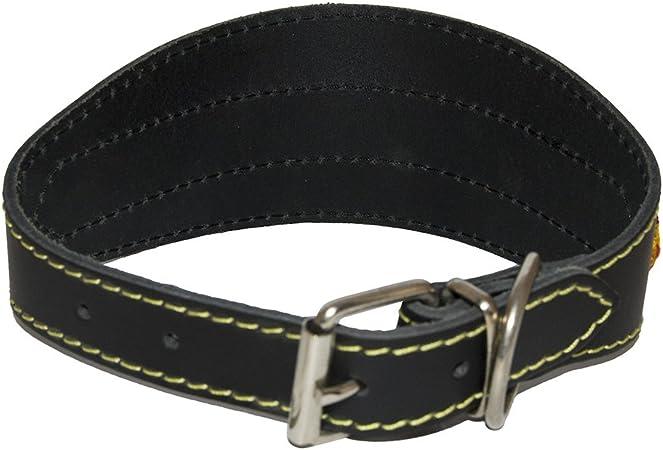 Mapel 622171 Collar de Perro Galgo con Detalle de Bandera y Costura 47 cm, Colores aleatorias: Amazon.es: Productos para mascotas
