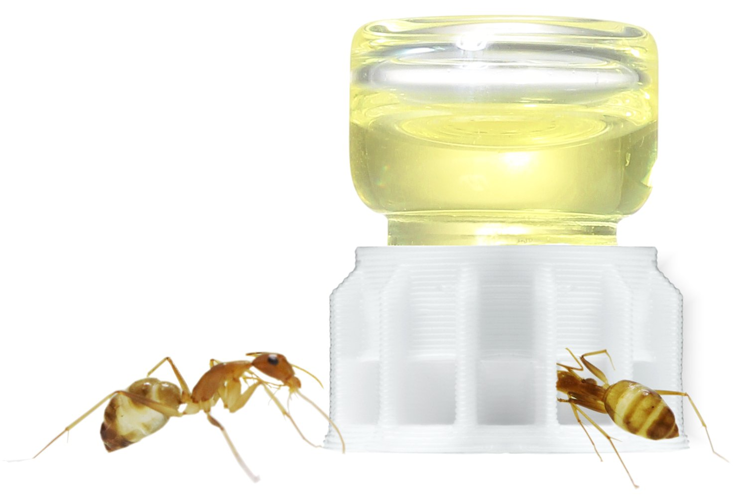 byFormica Ant Products Liquid Feeder Micro Feeder for Ants: for Water, Sugar Water, Or Ant Nectar (1 ml (Qty 17))