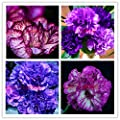 Cheap! 2017 Rare Carnations Seeds Flowers Seeds 200pcs/pack Dianthus caryophyllus Flowers Seeds for home garden planting mom gift