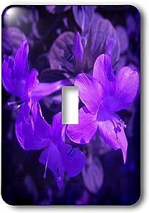 """3dRose lsp_7498_1""""Purple Pop Single Toggle Switch, Multicolor"""