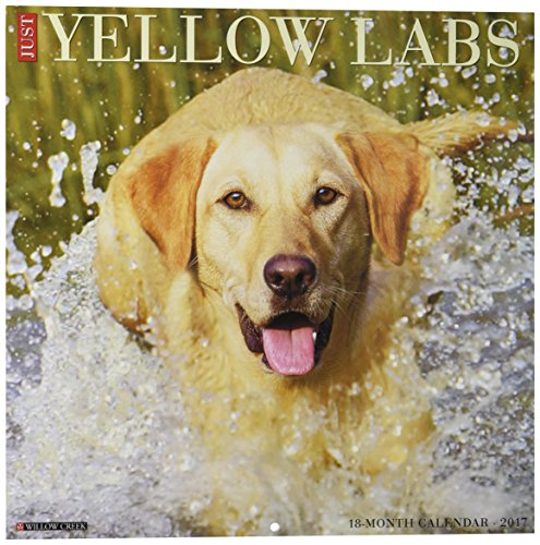Yellow Labs 2017 Wall Calendar