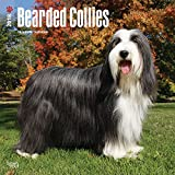 Bearded Collies 2018 12 x 12 Inch Monthly Square Wall Calendar, Animals Dog Breeds Bearded Collies (Multilingual Edition)